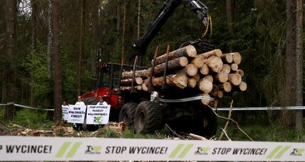 Poland continues logging venerable state forest, defying EU reforms